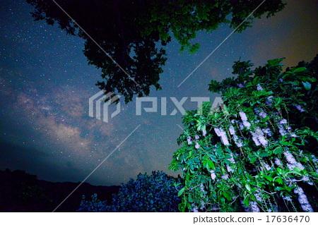 南國的花 銀河 玉蕊 17636470