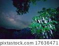 南國的花 銀河 玉蕊 17636471