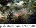 玉蕊 南國的花 隱蔽的地方 17636504