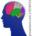 brain anatomy 17638453