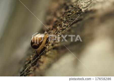 생물 소라 오카 모노아라가이, 모노아라가이를 닮은 모습의 육지 고둥. 귀여운 눈을하고 있습니다 17658286