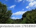 푸른, 하늘, 수목 17658969