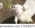 山羊 休假 旅途 17668674