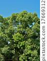 樟科 月桂科植物 树 17669312