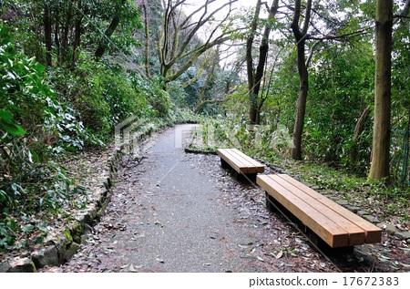 石川县金泽市本田的森林公园长廊 17672383