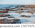 Stromatolites black rocks beach in Shark Bay 17677975
