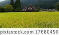 rice, field, panorama 17680450