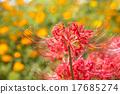 彼岸花 植物人 植物的 17685274