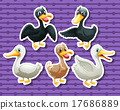 Different color of ducks 17686889
