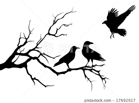 tree branch vector. ravens on halloween tree branch, vector branch p