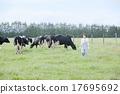 乳品 大農場 牛 17695692