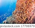 马尔代夫 自然 水下 17706979