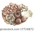 蘑菇 食品 原料 17728872