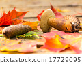 Mushroom, fir cones, autumn leaves of maple 17729095