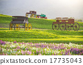 Beautiful landscape Historic carriage in flower  17735043