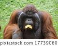 Taman Safari, Indonesia 17739060