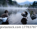 金鱗湖 鴨子 鴨 17763787