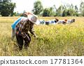 Thai rice farmer harvesting 17781364