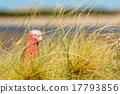 parrot, cacatua, red 17793856