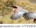 parrot, cacatua, red 17793858
