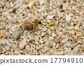 寄居蟹 植物學 漂亮 17794910