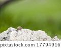 寄居蟹 植物學 漂亮 17794916