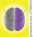 human brain 17796433