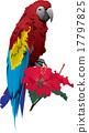 夏威夷 夏威夷人 鸚鵡 17797825