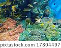 coral tropical fish 17804497