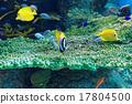coral tropical fish 17804500