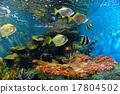 coral aquarium tropical 17804502