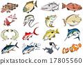 鱼 热带地区 梭鱼类 17805560
