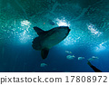 Deep-sea fish, moon fish 17808972