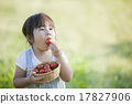 girl, young girl, tomatoe 17827906