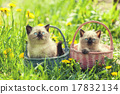 Two little kittens in a baskets on the grass 17832134
