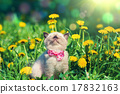 little kitten wearing bow tie on the grass 17832163