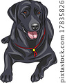 vector sketch dog breed Labrador Retriever 17835826