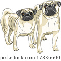 Vector. Pug dog breed. 17836600