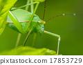 strange grasshopper 17853729