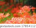 花朵 花卉 花 17854112