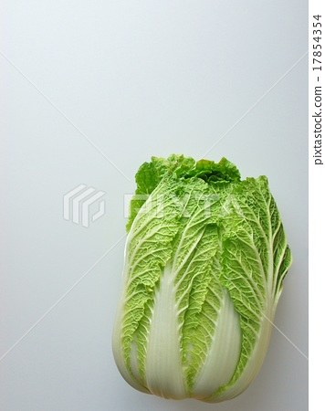 Chinese cabbage white back 4 x 3 size 17854354