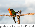 Bird,Sun conure parrot ,pet 17856058