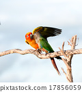 Bird,Sun conure parrot ,pet 17856059