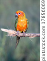 Bird,Sun conure parrot ,pet 17856069