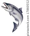 三文魚 鮭魚 跳 17860552