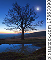 Lonely autumn naked tree on night mountain 17865090