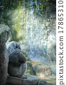 Chimpanzee resting in front of waterfall 17865310