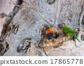 Australia parrot on boab tree 17865778