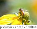 Honeybee 17870048
