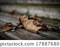 Dead leaves 17887680